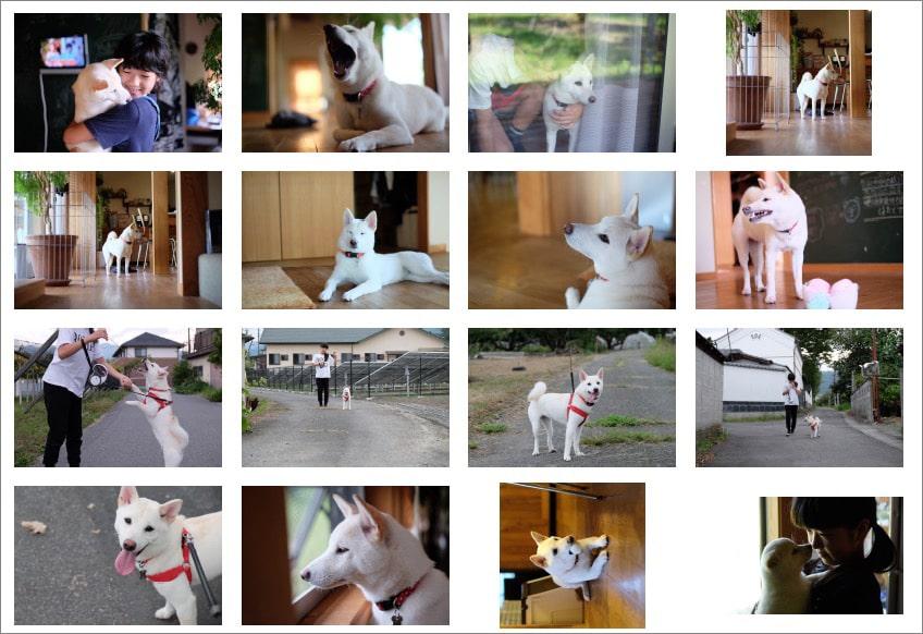 Macで複数写真をA4用紙1枚に並べて印刷する方法_仕上がりのイメージはこんな感じ。